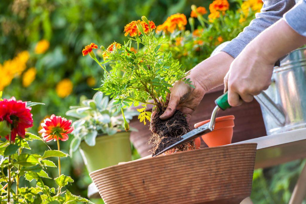 グリホサートは植物保護製品