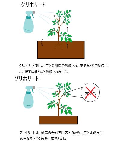 グリホサート剤-グリホサート 除草 剤 効果