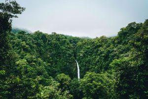 森林管理におけるグリホサートとは