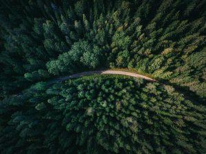 森林管理におけるグリホサート系除草剤について