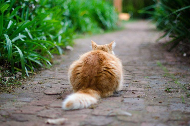 お庭で使用:グリホサート 安全性とは?ペットがいても大丈夫